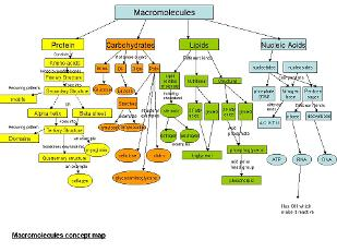 Unit Four: Macromolecules - The Molecules of Life